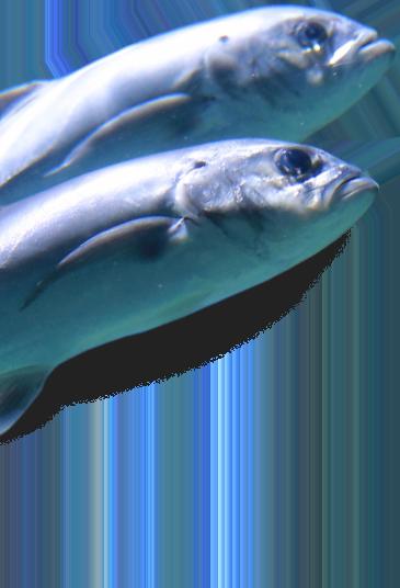 header fish left