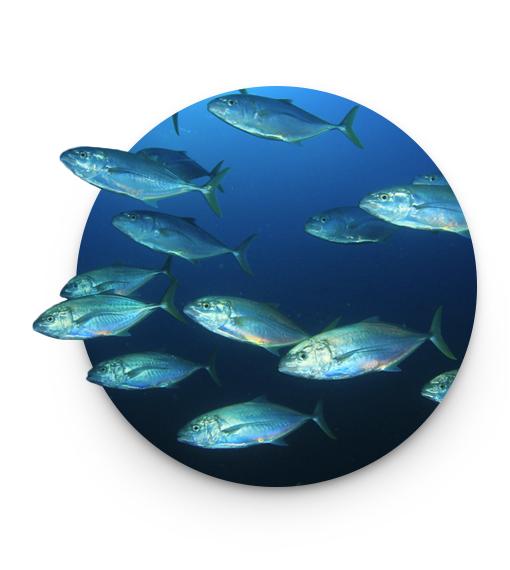 oceans milestones 2013
