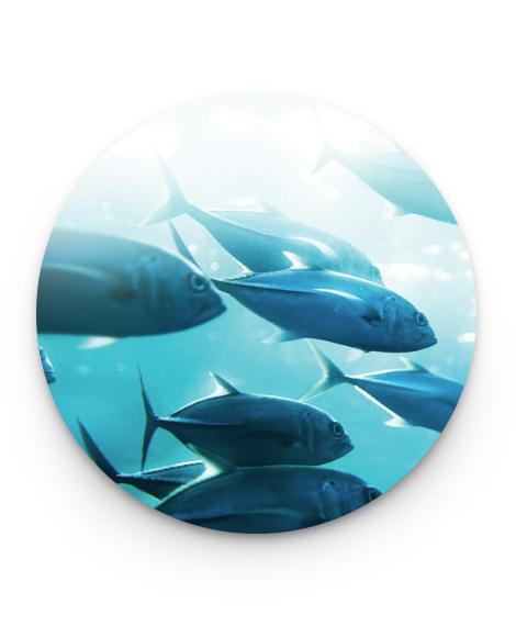 oceans milestones 2017