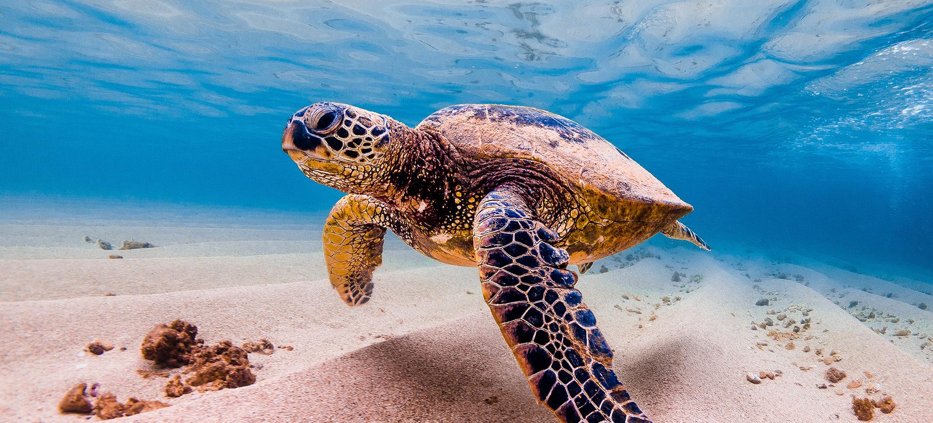 Célébrons la journée mondiale de la tortue!