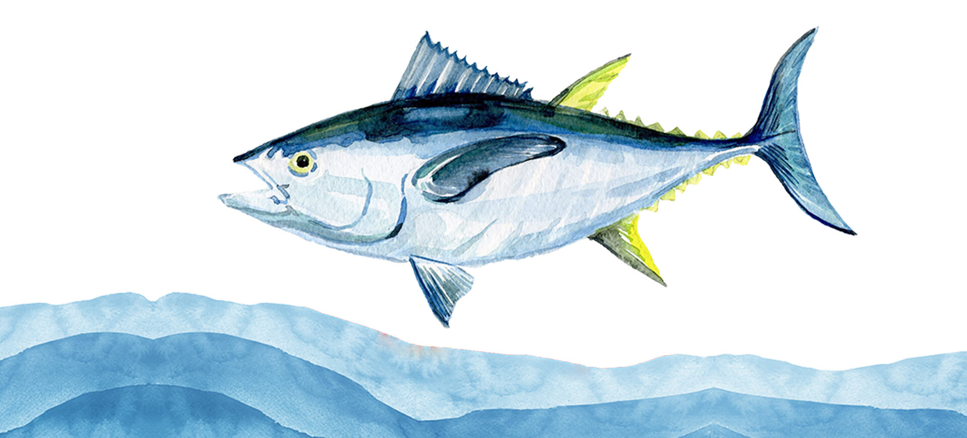 On World Tuna Day, Let's Celebrate the Health Benefits & Versatility of Tuna