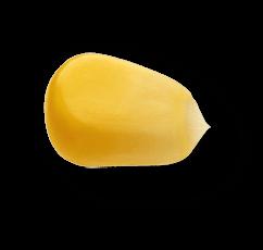 corn 01@0.75x