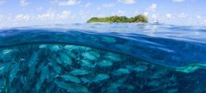 OceansBlog ResponsibleFishing Feature